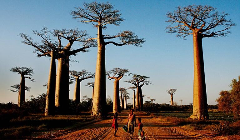 The Top 10 Sights of Madagascar